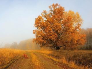 обои Дорога в осенний туман фото