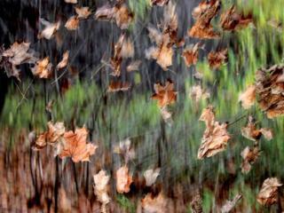 обои Листья осенние кружатся фото