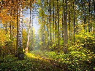 обои Грунтовая дорога в осеннем лесу фото