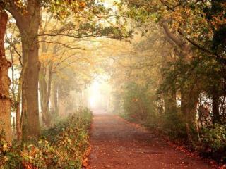 обои Дорога в осеннем тумане фото