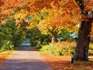 обои для рабочего стола: Дорога в солнечный осенний день