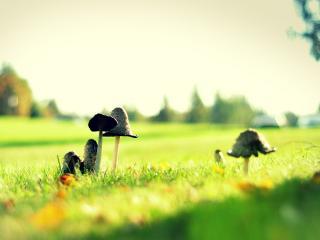 обои На траве грибы фото