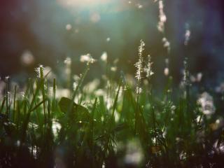 обои Пух растет на траве фото