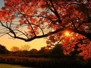 обои для рабочего стола: Осенний закат и дерево