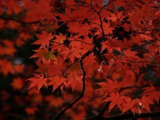 обои Осень вечерняя,   веточка красная фото