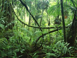 обои Дебри в джунглях фото