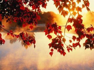 обои Солнце,   озеро и осень фото