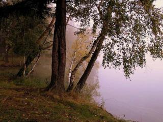 обои Деревья у воды в начале осени фото