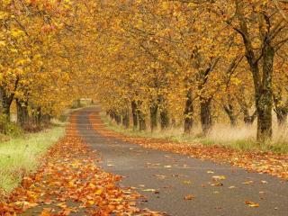 обои для рабочего стола: Дорога в осенних листьях
