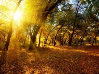 обои Осеннее солнце фото