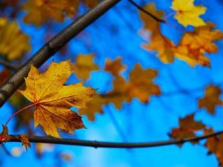 обои Осенние листья на фоне синего неба фото