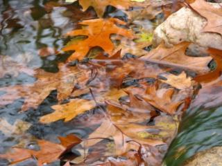 обои Осенние лужи фото