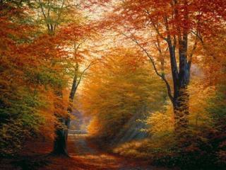 обои для рабочего стола: Осенний лес и дорога