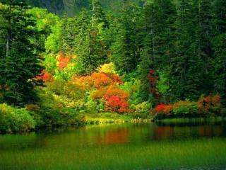 обои Разноцветный лес на берегу озера фото