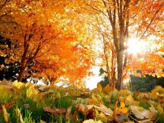 обои Тёплый осенний денёк фото