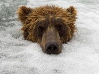 обои Медведь в пузырьках водопада фото