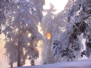 обои Морозный рассвет фото