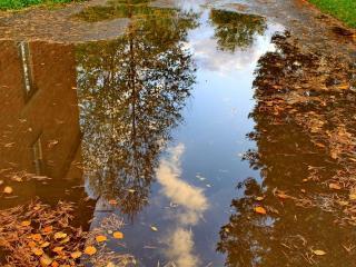обои Осенние зеркала фото