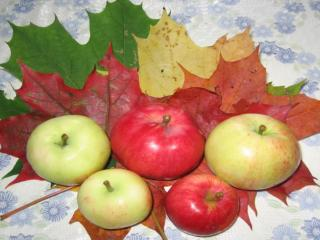 обои Осенние Яблочки фото