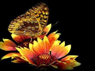 обои Бабочка и два цветка фото