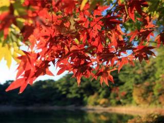 обои для рабочего стола: Веточка с осенними листьями красными