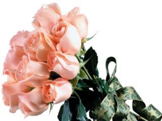 обои Букет бежевых роз фото