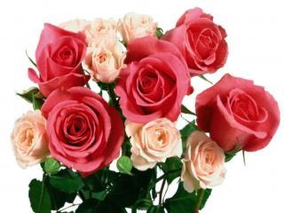 обои Букет разных роз фото