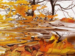 обои для рабочего стола: Осенние листья падают в воду
