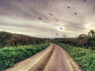 обои для рабочего стола: Летят журавли над проселочной грунтовой дорогой
