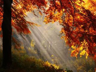 обои для рабочего стола: Солнечные лучи в осеннем лесу
