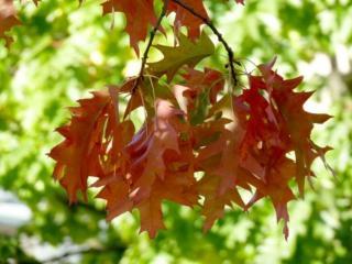 обои Осенние листья на фоне зелени фото