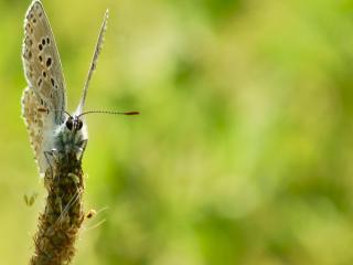 обои Акро фото бабочки с усиками фото