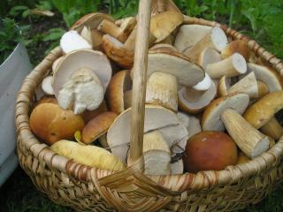 обои Белые грибы в корзине фото