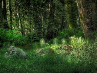 обои Глухие места в лесу фото