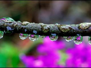 обои Капельки дождя на ветке фото