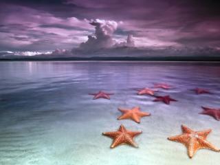 обои На мелководьи морские звезды фото