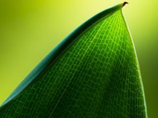 обои Рисунок на листе зеленом фото