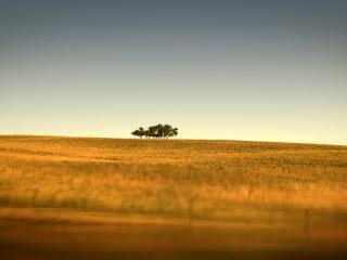 обои Среди поля деревья стоят фото