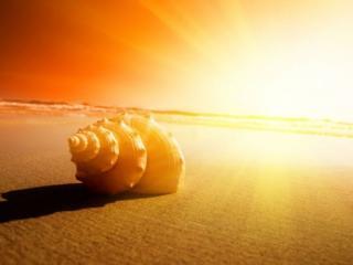обои Большая ракушка и яркое солнце фото