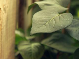 обои Овальный лепесток растения фото