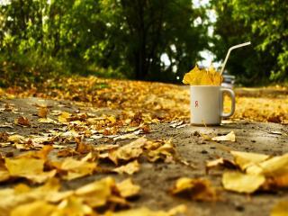 обои Осеннее одиночество фото
