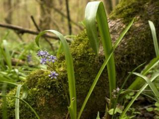 обои Суровый лес фото