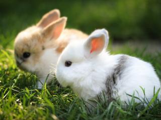 обои Два маленьких кролика фото