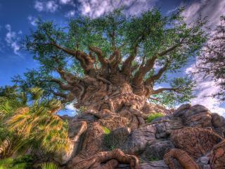 обои У подножия дерева удивительной красы фото