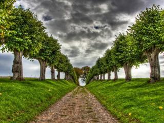 обои для рабочего стола: Грунтовая дорога с рядами деревьев у обочины