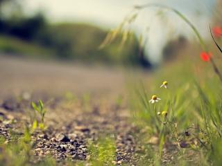 обои для рабочего стола: Бедная растительность у дороги