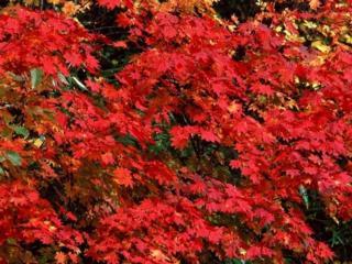 обои Красная осень фото
