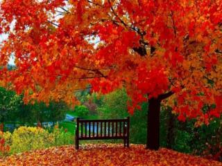 обои Одинокая скамейка под осенним красным деревом фото