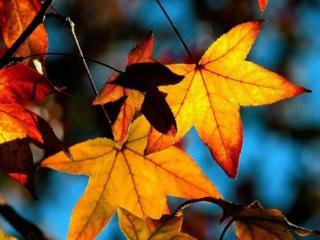 обои Последние листья осени фото