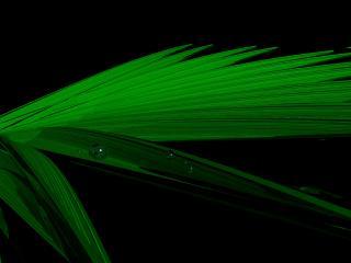 обои Пальмовый лист фото